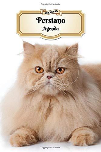 2020 Persiano Agenda: 107 Pagine   Dimensioni DIN A5   Pianificatore Settimanale   12 Mesi   Due Pagine Per Settimana   Calendario   Diario   Gatto