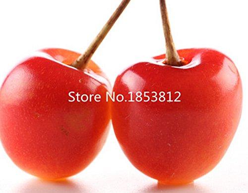 2016 Asian Rare Cherry Seeds Fruit Seeds 10pcs/pack Bonsai Seeds Violet