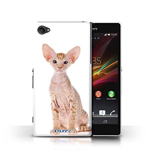 Kobalt® Imprimé Etui / Coque pour Sony Xperia Z1 Compact / American Shorthair conception / Série Espèces de chats Peterbald