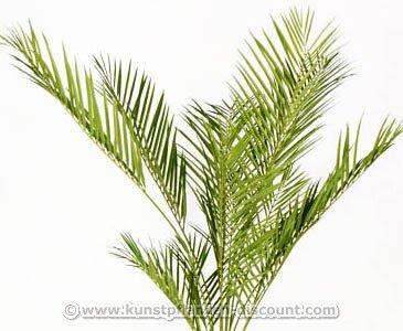 Areca Kunstpalme, UV-geschützt mit 180cm – Kunstpflanze Kunstbaum künstliche Bäume Kunstbäume Gummibaum Kunstoffpflanzen Dekopflanzen Textilpflanzen Textilbäume Pflanzen aus