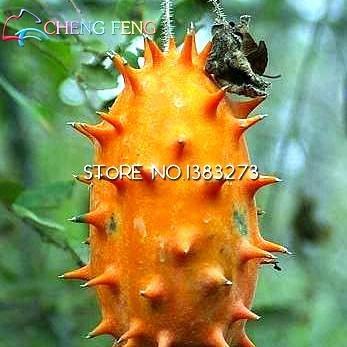 big-sale-20-pcs-lot-japon-concombre-seed-courtyard-balcon-pot-bonsai-semences-potageres-plantes-cucu