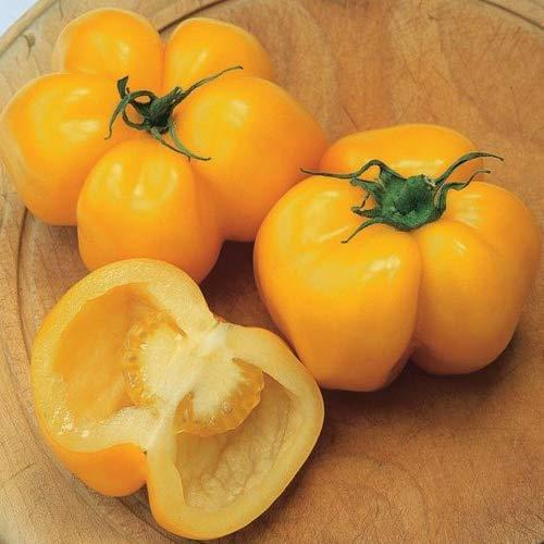 """Tomate""""Yellow Stuffer"""" 10 x Samen aus Portugal 100% natürlich Aufzucht/absolute Rarität/Massenträger ideal für Salat und Snacks"""
