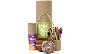 bioQ Plantable Mini Grow Kit | Mini Coco Pot Planter and Coco Peat & Plantable Mini Colouring Pencils | Eco Friendly Birthday Gift for Kids