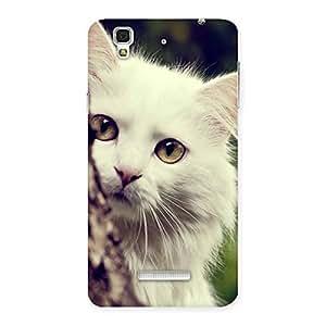 Enticing Hiding Cat Multicolor Back Case Cover for Yu Yureka