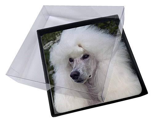 Advanta - Coaster Set 4X Weißer Pudel -Hund Bild Setzer gesetzt -