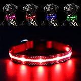 Pawow LED Leuchthalsband Hunde Leuchtend, Verstellbar USB Hunde Halsband Wiederaufladbar für Mittelgroße Grosse Hunde (Mittel, Rot)