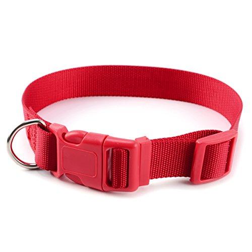 SurePromise One Stop Solution for Sourcing Hundehalsband mit Sicherung Hunde Halsband Nylonhalsband Halsbaender Halsung Gr.S-L 6 Farben