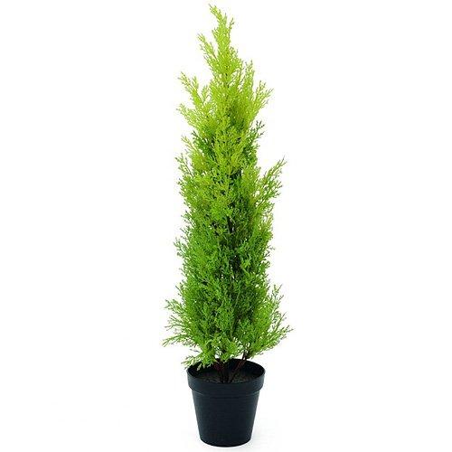 Euro Palms 82606961 Zypresse, Leyland, 75 cm