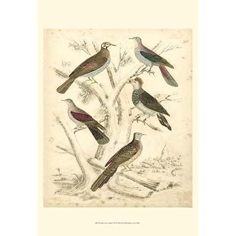 Malcolm Milne – Habitat aviar Pequeño I ( P) Artistica di Stampa (33,02 x 48,26 cm)