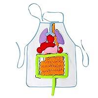 3D Organ Apron, Plush Stuffed Viscera Internal Organs Model with Transparent Apron for Kindergarten Kids Children Physiological Education