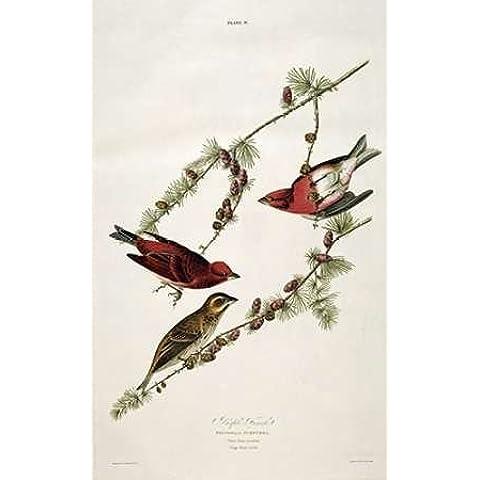 Feelingathome-Stampa-artistica_x_cornice-Viola-Finch-cm98x59-arredo-poster-fineart