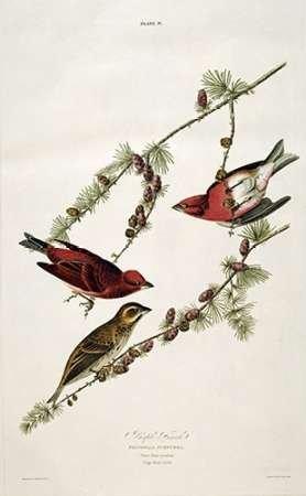 Feelingathome-Stampa-su-tela-intelaiata-Viola-Finch-cm103x62-canvas-intelaiato