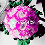 Pinkdose 100 Stück/Beutel Riesen Hibiskus-Blume Bonsai Pflanze Indoor Blume Eibisch Bonsai-Baum-Haus-Garten-Dekoration Topfpflanzen: 2