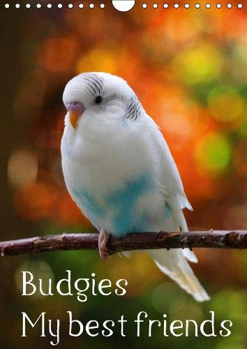 Budgies - my best friends (Wall Calendar 2019 DIN A4 Portrait): A magnificent cover and twelve heartwarming photos of sweet budgies make this imposing ... calendar, 14 pages ) (Calvendo Animals) (Photo Aviary)