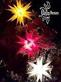 Baltasar Ministern Adventsstern außen + innen Outdoor Kunststoff Leuchtstern 3 D 20 Zacken (rot)