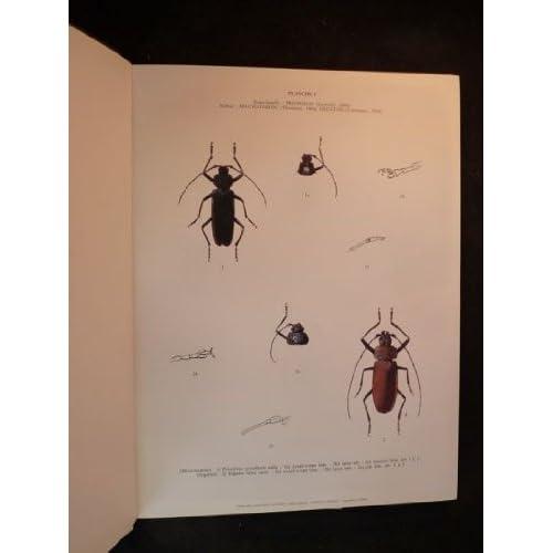 Atlas des Longicornes de France : Peints d'après nature