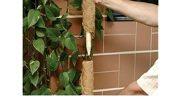60 cm Floraworld Pflanzstab Kokos