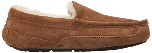 Ugg Ascot 5775, Chaussons homme Châtaigne