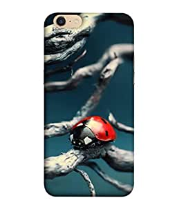 Oppo A39 Back Cover, Oppo A39 Back Case Ladybug In The Spring Design From Printvisa