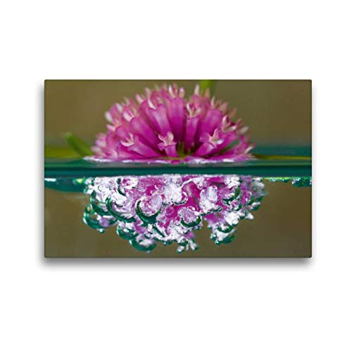 Calvendo Premium Textil-Leinwand 45 cm x 30 cm quer Bubble World - Pflanzen unter Wasser - Wiesen-Klee, Venetien | Wandbild, Bild auf Keilrahmen, Fertigbild auf echter Leinwand, Leinwanddruck