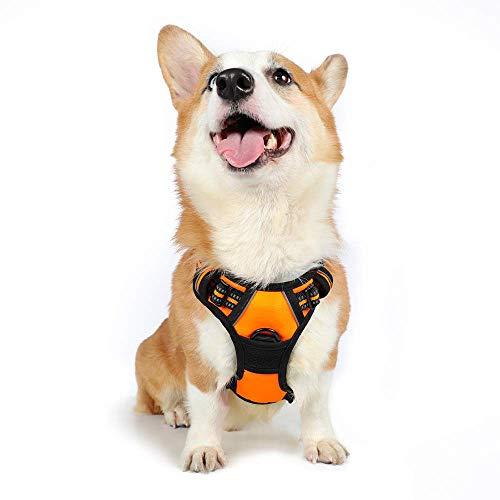 rabbitgoo No-Pull Hundegeschirr für kleine Hunde Welpengeschirr Einstellbar Weich Geschirr Sicher Kontrolle Brustgeschirr Gepolstert Orange S