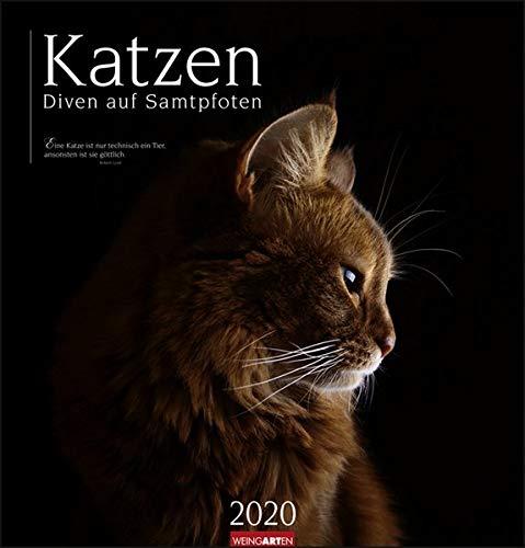 Katzen - Diven auf Samtpfoten 2020 46x48cm