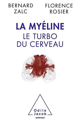 La Myline: Le turbo du cerveau