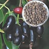 Dried Jamun SEEDS, black plum SEEDS, Ind...