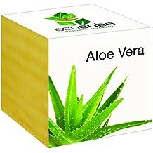 Aloe Vera im Holzwürfel