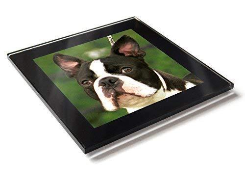 Boston Terrier Hund Welpe Premium Glastisch Untersetzer mit Geschenk-Box -