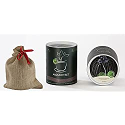 Seedeo Anzucht-Geschenkset Fledermausblume (Tacca chantrieri)