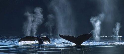 greenpeace-storia-di-uranio-e-di-balene