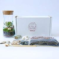Kit de terrariums en verre transparent faits à la main Bouchon rond en liège Pour jardin Mousse de fittonia en pièce maîtresse Hauteur de 19cm, Kit