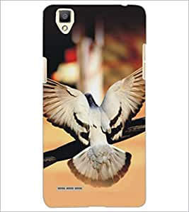 PrintDhaba Piegon D-5153 Back Case Cover for OPPO F1 (Multi-Coloured)