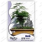 Paquet d'origine 8 Graines / Pack, Asperges graines de fougère, Asparagus BonsaiTree, arbres en pot balcon, graines de plantes
