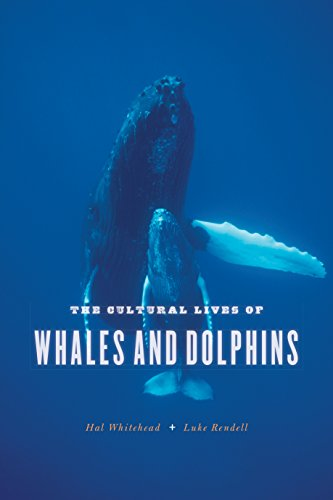 The Cultural Lives Of Whales And Dolphins By Hal WhiteheadLuke Rendell PDF