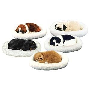 Sleeping Pet Puppy - Pet Dreamz