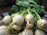 Semi Online Legend giardino Rapa Shogoin DGS706 (bianco) 1000 sementi biologiche