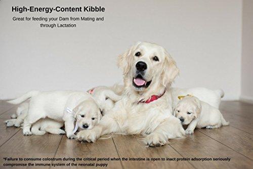 Vonziu Elite Premium Hundefutter / Welpenfutter – Hochenergetische Tiernahrung – Für kleine & große Hunderassen – Hypoallergen – Reich an Fischöl / Vitaminen / Mineralien – 100% Bio-Zutaten - 8