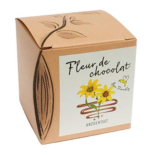 Pflanzen Kölle Anzuchtset Fleur de Chocolat, Saatgut und Anzuchterde inklusive