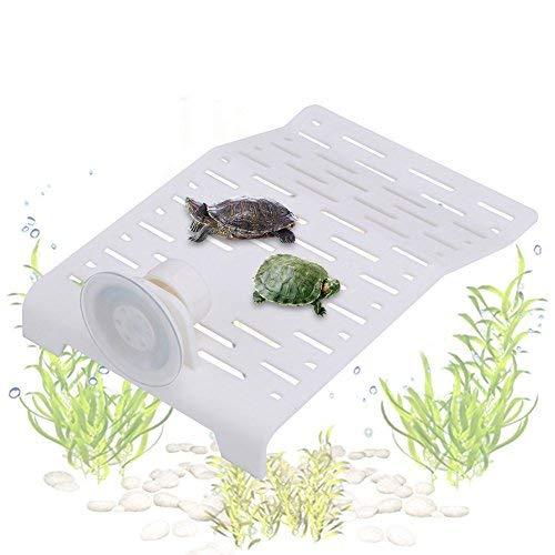 Fdit Tortoise Terraza Acuario Peces Tank Tortuga Techo