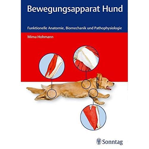 PDF] Bewegungsapparat Hund: Funktionelle Anatomie - Biomechanik und ...