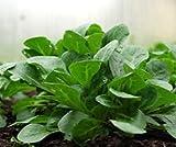Bobby-Seeds Salatsamen Feldsalat Vit Portion