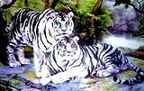 2 weiß Tigers Lenticular 3D Effekt Bild, gebrauchsfertig Holzrahmen, 34 x 24cm