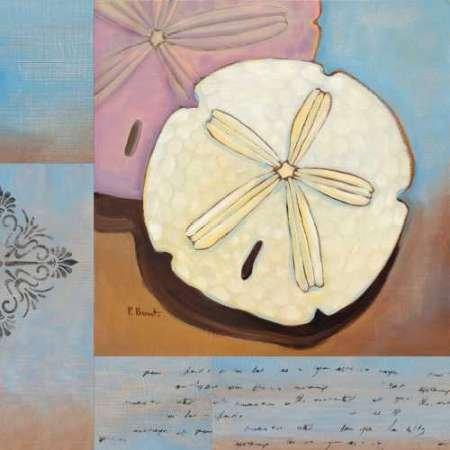 Sanibel Sand Dollar von Brent, Paul–Fine Art Print erhältlich auf Leinwand und Papier, canvas, SMALL (12 x 12 Inches )
