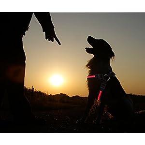 PRECORN LED Hundegeschirr Leuchtgeschirr Brustgeschirr Sicherheitsgeschirr Geschirr rot Gr. S