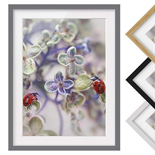 Bilderwelten Póster Enmarcado - Ladybug In The Garden
