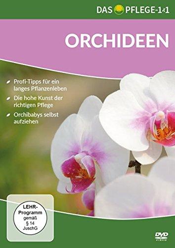 Das Pflege-1x1 Orchideen