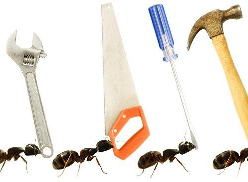 chris-and-kate-knorr-design-pics-carpenter-ants-camponotus-pennsylvanicus-photo-print-9144-x-6604-cm
