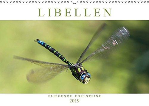 Libellen - Fliegende Edelsteine (Wandkalender 2019 DIN A3 quer): Faszinierende Nah- und Flugaufnahmen von heimischen Großlibellen-Arten (Monatskalender, 14 Seiten ) (CALVENDO Tiere)